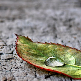 SAVE WATER,SAVE LIFE by Suddhabrata Chakraborty - Nature Up Close Leaves & Grasses ( droplet, leaf )