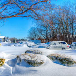After the Snow-Storm !!! by Rohit Tripathi - Landscapes Weather ( illinois, winter, cold, snow-storm, ice, snow, des plaines, chicago, storm, usa )