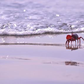A little journey  by Chobi Wala - Animals Sea Creatures ( , color, colors, landscape, portrait, object, filter forge, selective color, pwc, Beach, sunset, blue, water, ocean. , noordhoek, south africa, noordhoekchallenge )
