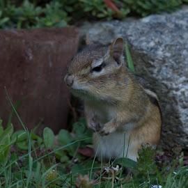by Susan Hartman - Animals Other Mammals