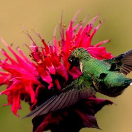 by Nathalie Godin - Animals Birds ( n )