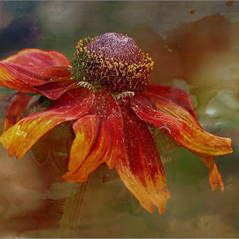 Rudbeckia by Carol Lauderdale - Digital Art Things ( flowers, digital malipulation, floral art, rudbeckia, digital art )