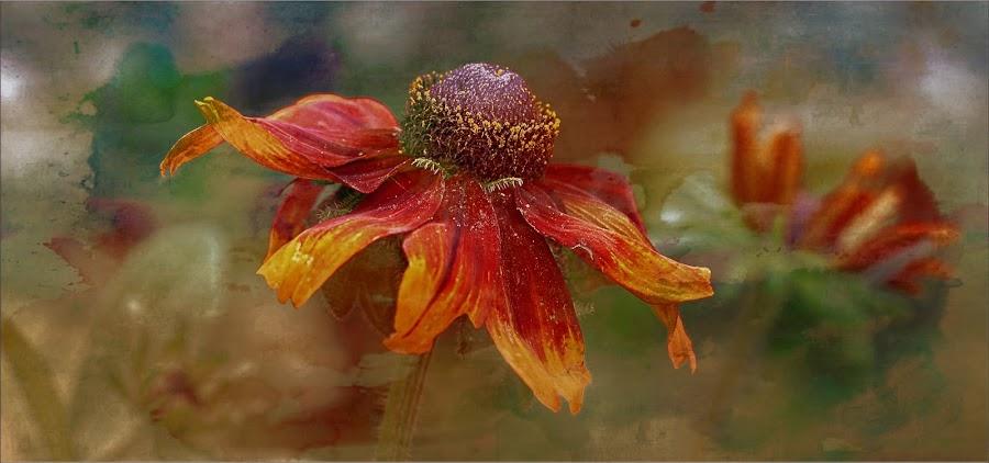 Rudbeckia by Carol Lauderdale - Digital Art Things ( flowers, digital malipulation, floral art, rudbeckia, digital art )