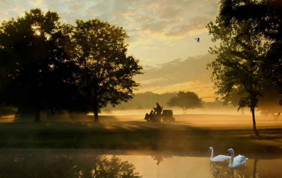 Morning On A Golf Coarse by Dennis Granzow - Landscapes Prairies, Meadows & Fields ( swans, golf course, lawn mower, digital art, landscape, pond, composite )