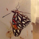 Gulf Fritillary Butterfly ( A Beautiful Oil Painting, On The Wings Of A Butterfly )