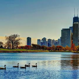 lincoln park by Fraya Replinger - City,  Street & Park  City Parks ( lincoln park, skyline, fall, duck, ducks, chicago )