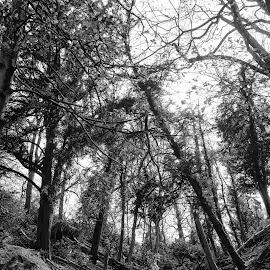 trees by Kathleen Devai - Nature Up Close Trees & Bushes ( grass, roots, shadow, trees, mono, light, branches )