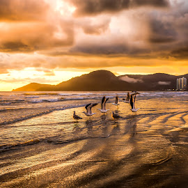 Sunrise with birds by Rqserra Henrique - Landscapes Sunsets & Sunrises ( clouds, brazil, rqserra, veach, colorfull, sunrise, birds, golden )