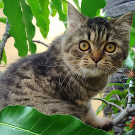 cat on tree by Elvis Hendri - Animals - Cats Playing ( cats, kitten, cat, pet, cute cat, animal )