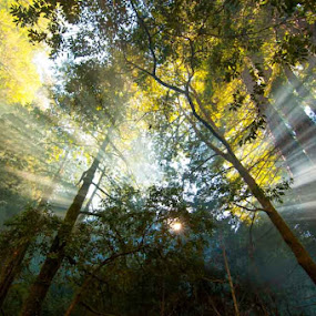 Hope springs... by Kathy Dee - Landscapes Forests ( streaming, dreamy, heavenly, dream, beautiful, pwcsunbeams-dq, forest, travel, smoky, rays, sun, outdoors, light, golden )