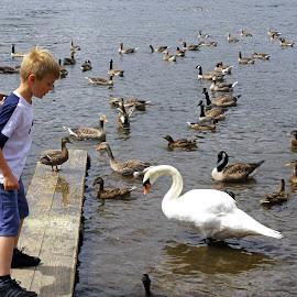 Feeding the Water-birds by Ingrid Anderson-Riley - Babies & Children Children Candids