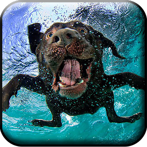 Dogs Underwater Live Wallpaper