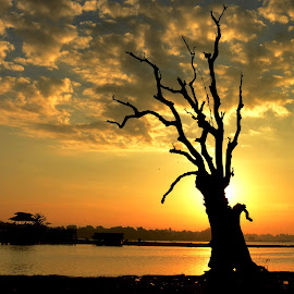Dead Tree by Aung Kyaw Soe - Landscapes Sunsets & Sunrises (  )