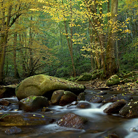 by Siniša Almaši - Nature Up Close Water ( water, up close, forest, yellow, landscape, depth, colours, nature, tree, autumn, cascade, trees, view, stones, light, rocks, river )