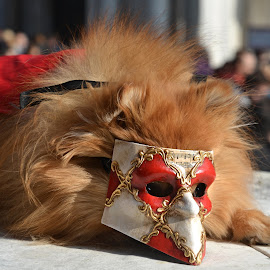 And Miss Carnival 2017 in Venezia is ... by Marcel Cintalan - Animals - Cats Portraits ( venezia, cat, carnival, mask, italy, portrait, miss, animal )