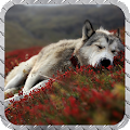 White Wolf Wallpaper APK for Ubuntu