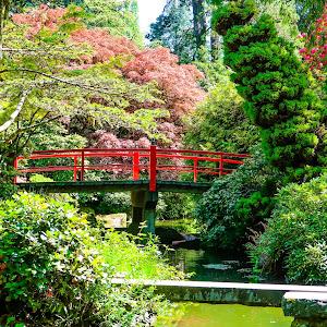 Kubota Gardens Bridge and Gardens (1 of 1).jpg