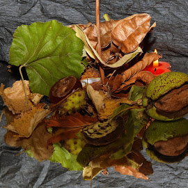 autumn has arrived by LADOCKi Elvira - Artistic Objects Other Objects