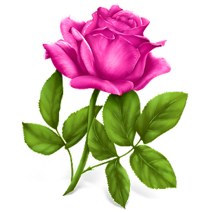 Good morning Flower Wallpapers Colorful Roses 4K for pc