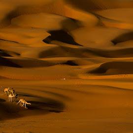 Charming nature by Adeeb Alani - Nature Up Close Sand ( #desert #nature )