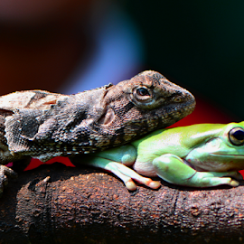 by Ajar Setiadi - Animals Reptiles