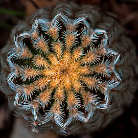 Top of cactus by David Winchester - Nature Up Close Other Natural Objects