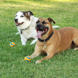 Friends enjoying the park by Donna Probasco - Novices Only Pets (  )