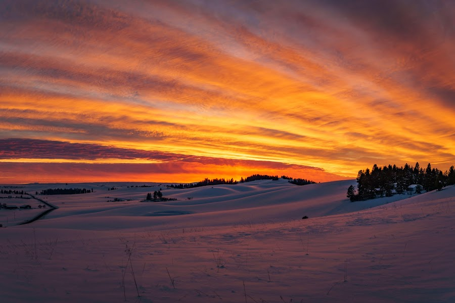 by Scott Wood - Landscapes Sunsets & Sunrises ( idaho, field, sky, winter, tree, latah, sunset,  )