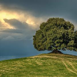 by Joško Šimic - Nature Up Close Trees & Bushes