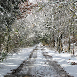Such A Winters Day by Rick Covert - Nature Up Close Trees & Bushes ( country, snow, rural, arkansas, winter, ice, arkansas photographer )
