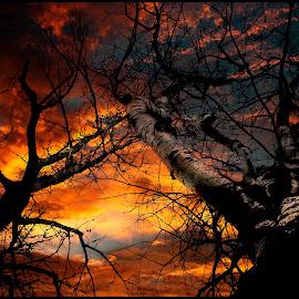 Stromy v ohni by Jana Vondráčková - Digital Art Places