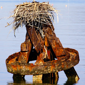 Osprey Nest.jpg
