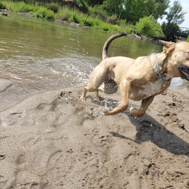 by Melinda M - Animals - Dogs Running