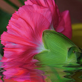 Carnation Reflection by Millieanne T - Digital Art Abstract