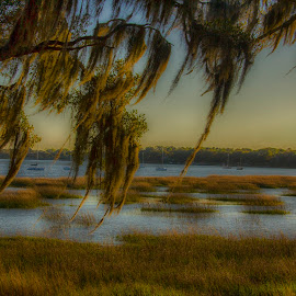 Swamp by Keith Wood - Landscapes Prairies, Meadows & Fields ( beaufort, kewphoto, hdr, swamp, keith wood )