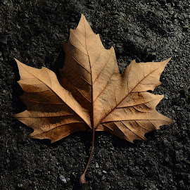 A leaf. by Denton Thaves - Nature Up Close Leaves & Grasses ( leaf )
