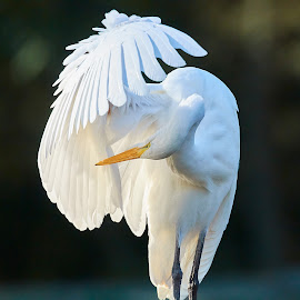 Bird 577~ 1 by Raphael RaCcoon - Animals Birds