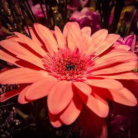 Flower by Anne LiConti - Instagram & Mobile Android ( #mobilephotography, #phonephoto, #mobilephoto, #mobile, #instagram, #flower )