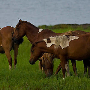 wild horses 2.jpg
