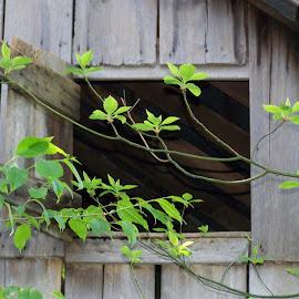 Barn Leaves by Kristina  Dorsett - Nature Up Close Leaves & Grasses ( nature, nature up close, leaf, landscapes, leaves )