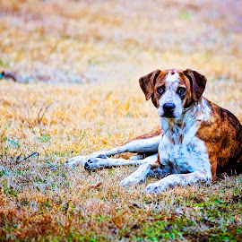 Freckles  by Sabrina Causey - Animals - Dogs Portraits ( fur, puppy, dog, portrait, mammal, animal )