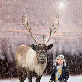 Christmas Star by Patty Schmitt - Public Holidays Christmas