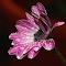 aIMG_9208_cr.jpg