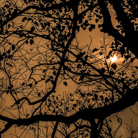 Natural Silhouette Pattern by Subhajit Basak - Abstract Patterns ( abstract, patterns, still life, silhouette, nature close up, leaves, morning, sun, natural beauty, sky, tree, pattern, nature, nature up close, nature photography, abstract photography, sunrise, black, branches, daylight )