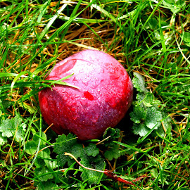 Left in the rain by Martin Stepalavich - Food & Drink Fruits & Vegetables