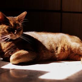 Finik by Valentyn Kolesnyk - Animals - Cats Portraits