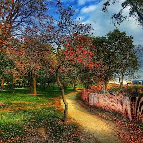 ColorFALL by Louis Perlia - City,  Street & Park  City Parks ( fence, sky, hdr, grass, color, fall, path, trees, beach, evanston, light, sun )