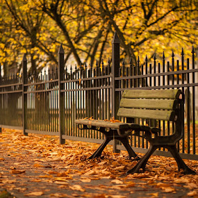 Park Bench by Garry Dosa - City,  Street & Park  City Parks ( peaceful, bench, autumn, serene, fall, yellow, leaves, golden, colours,  )