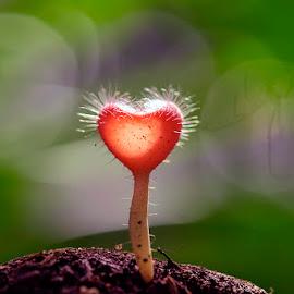 love by Sandi Nopri yanto - Nature Up Close Mushrooms & Fungi