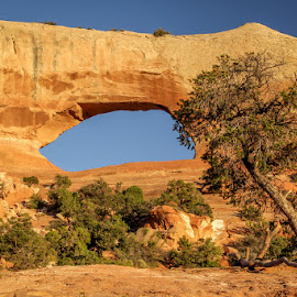 Arch by Ruth Sano - Landscapes Caves & Formations ( blue sky, tree, arch, photography )